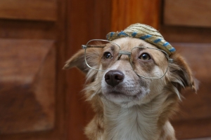 Dog_with_Glasses_25percent_B